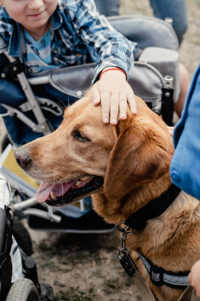 Therapy dog being pet by child in wheelchair